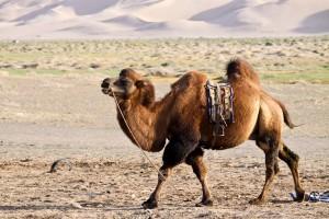 live-like-mongolian-nomad-15